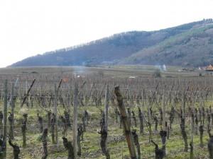 Alsace-feb-14-le-tasting-room15