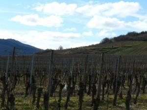 Alsace-feb-14-le-tasting-room21