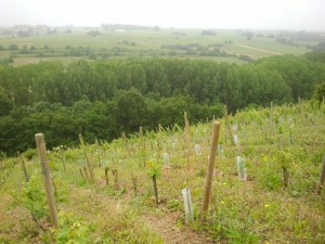 Loire-Wine-Discovery-Tour-le-tasting-room03