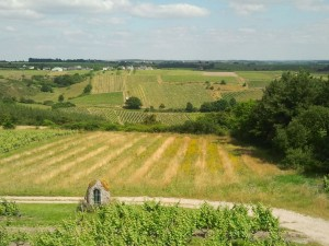 Loire-Wine-Discovery-Tour-le-tasting-room12
