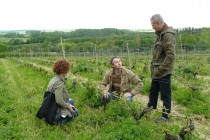 Nigel-explaining-pruning-at-Domaine-de-Bablut-in-Brissac