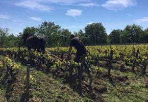 grattage in the vineyard loire wine tours