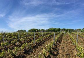 grattage loire wine tours