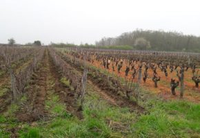 Loire wine tours education