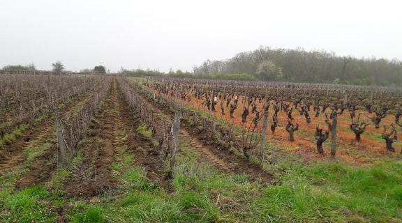 Loire wine tours education