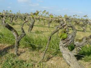 easter-loire-wine-tour-leduc-frouin-pithon-paile-le-tasting-room03