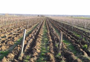 freshly worked vineyards in vouvray loire wine tours