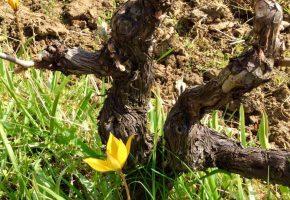 huet vineyard loire wine tours