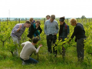 Learning all about the vineyard with Nigel at Chateau de Pimpean